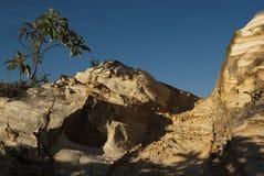 树和岩石在巴西 免版税库存照片