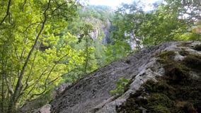 树和岩石本质上 库存照片