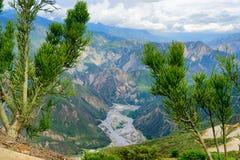 树和峡谷 免版税库存图片