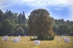 椴树和干草包装了在冬天季节,立陶宛 免版税库存图片