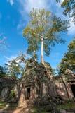 树和废墟 库存图片