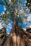 树和废墟 免版税库存照片