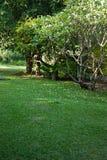 树和庭院史诗泰国 免版税库存照片