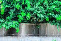 树和庭院篱芭的 免版税库存照片