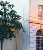 树和建筑学合计秀丽和朴素 免版税图库摄影