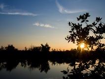 树和惊人的多云天空剪影与日出在Th上 库存照片