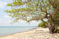 树和摇摆在海岛海边在泰国 库存图片