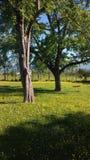 树和摇摆 库存图片