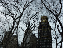 树和摩天大楼 免版税库存图片