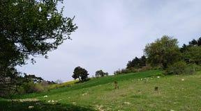 树和新鲜的草 免版税库存照片