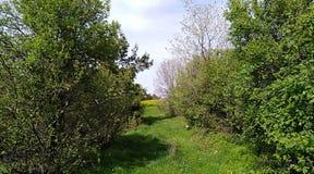 树和新鲜的草 免版税库存图片