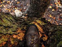 树和旅行 库存图片