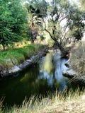 树和日落和湖 免版税图库摄影