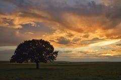 树和日落在领域 免版税库存照片