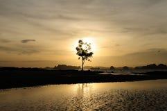 树和日落海洋 免版税库存照片