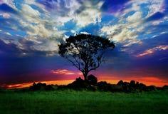 树和日落 免版税库存照片