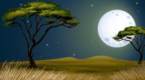 树和明亮的fullmoon 库存图片
