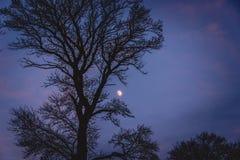 树和月亮在晚上 免版税图库摄影