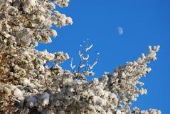 冻树和月亮 免版税库存图片