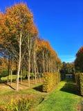 树和树篱在autum在公园 库存图片