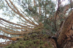 树和树荫 免版税库存照片
