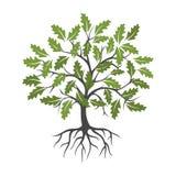 树和根商标传染媒介叶子 皇族释放例证