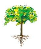 树和根绘画,传染媒介例证 向量例证