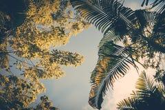 树和棕榈叶 免版税库存图片