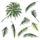 树和棕榈树的例证分支 免版税库存图片