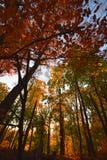 树和森林在早黄色阳光下,在秋天 免版税库存图片