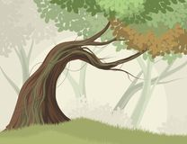 树和森林 免版税图库摄影