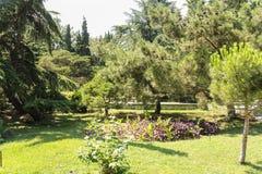 树和植物在城市公园 图库摄影