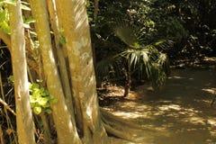 树和植物在密林 图库摄影