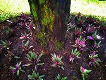 树和植物在庭院里 库存图片