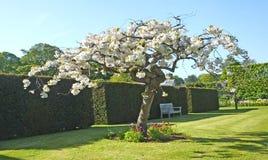 树和植物在被围住的庭院里 免版税库存图片