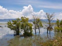 树和植物湖边 免版税库存照片