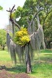 树和植物 免版税库存照片
