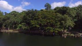 树和植被在山湖岸 寄生虫天线 股票录像