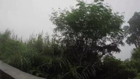 树和植被沿狭窄的绕坚固性在多山省在有薄雾的天 股票视频