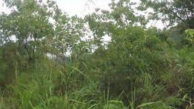 树和植被沿狭窄的绕坚固性在多山省在有薄雾的天 影视素材