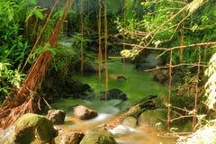 树和水在Akaka落国家公园在夏威夷 图库摄影