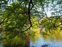 树和池塘库肯霍夫的荷兰 免版税图库摄影