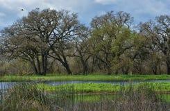 树和池塘 免版税库存照片