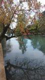 树和池塘 免版税图库摄影