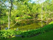 树和池塘 免版税库存图片