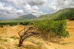 树和沙丘 免版税库存照片