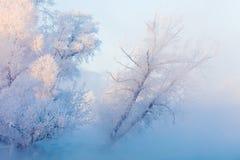 树和河冬天风景在一个有雾的早晨 库存照片