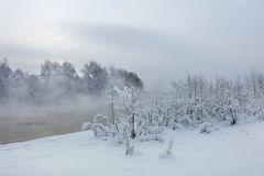 树和河冬天风景在一个有雾的早晨 免版税库存照片