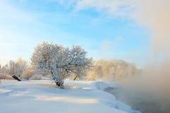 树和河冬天风景在一个有雾的早晨 图库摄影