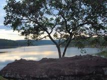 树和河在泰国 免版税库存照片